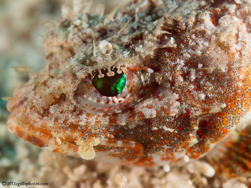 MushroomScorpionfish-eye-CA219464-Edit