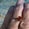 Frogfish-finger-CA148430-Edit
