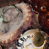 Octopus-shell-P1213469-Edit