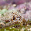 Bumblebee-shrimp-2CA011027-Edit