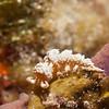 AustraleolisCatina-CA067385-Edit