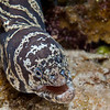 ChainMoray-CA158487-Edit