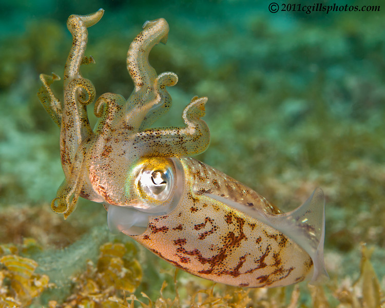 Squid-2CA310751-Edit
