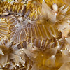 CoralFeeding-CA310837-Edit