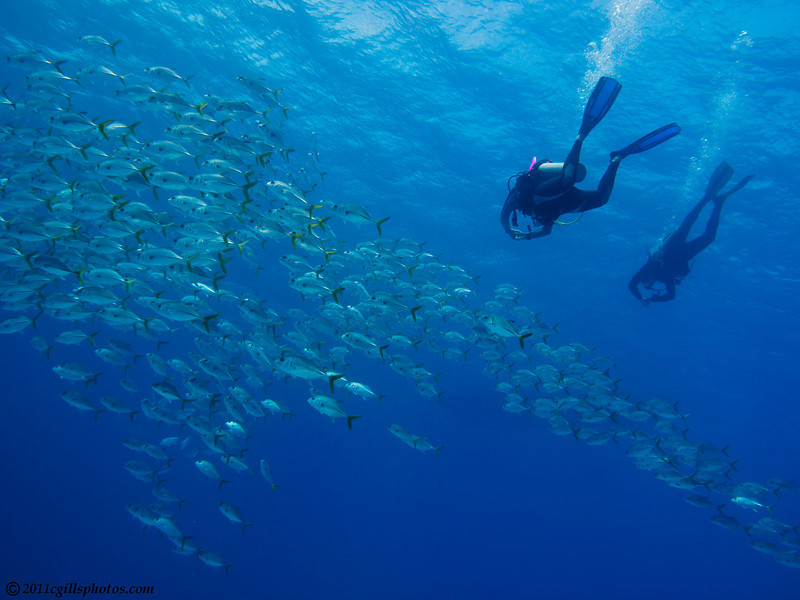 Divers-jacks-CA128162-Edit