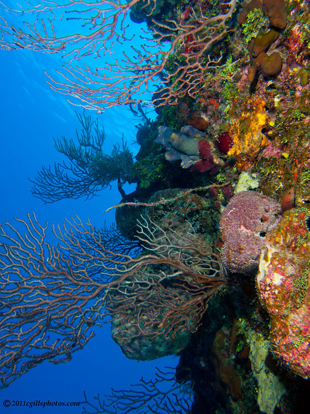 Reef-WA-CA067243-Edit