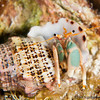 Hermit-Crab-unknown-2CA021260-Edit