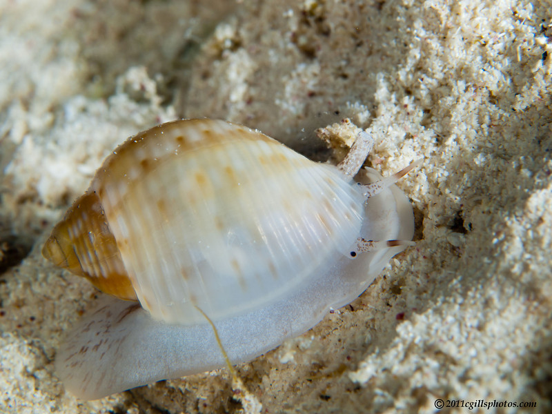 Shell-unknown-CA209214-Edit