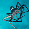 Spider-CA016578-Edit