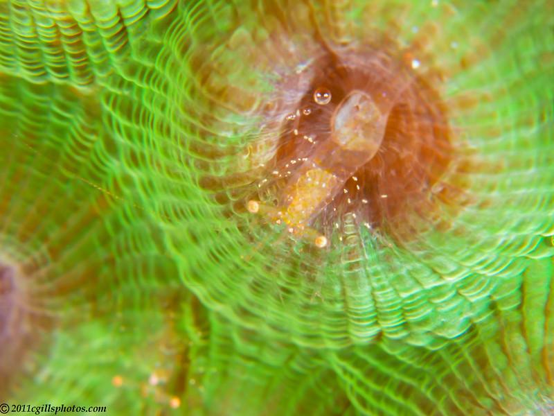 Shrimp-unknown-P3295182-Edit