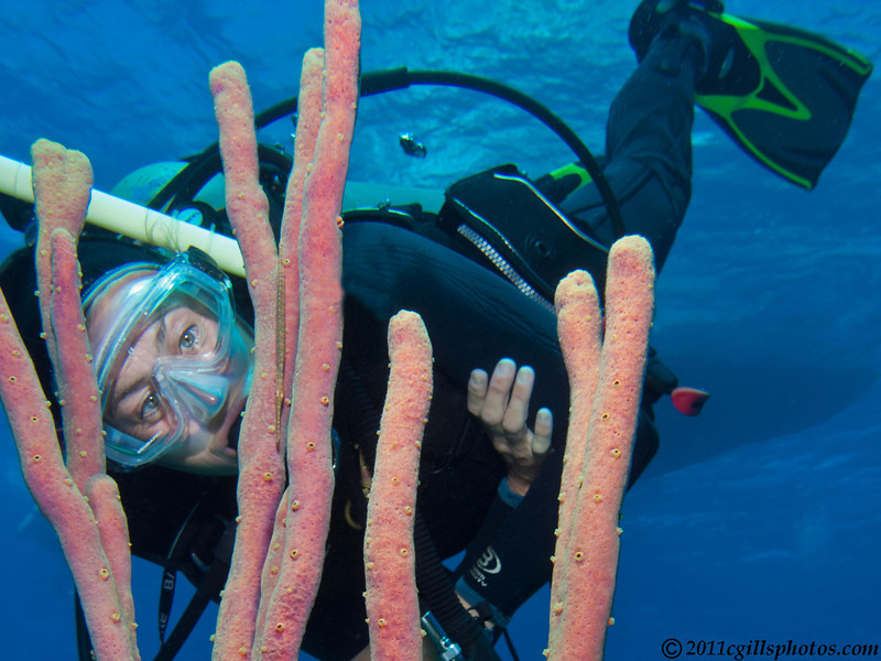 Toni-trumpetfish-CA057153-Edit