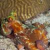 Octopus-CA168637-Edit