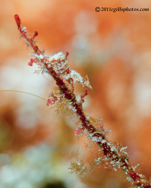 Shrimp-unknown-2CA031353-Edit