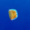 thimble-jelly-2CA051758