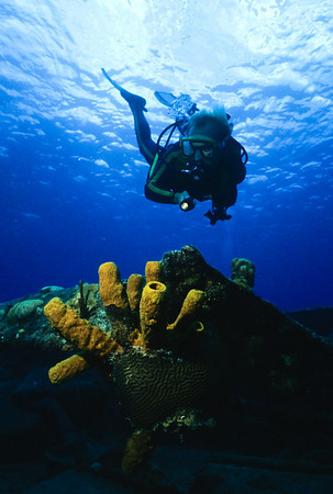 Mike Mesgleski poses by a colorful yellow tube sponge.