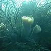 Reef Sceen