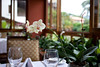 Live orchids on the tables for us to enjoy enhancing the dining experience.