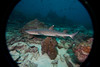 """It was obvious from our first """"checkout"""" dive that the sharks were everywhere.  Mostly whitetips."""