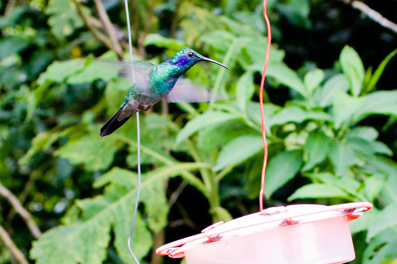 There was one section of the garden with enumerable hummingbird feeders.