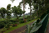 Another view of the coffee plantation.