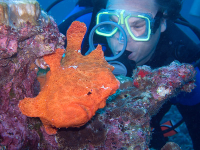 Dave inspecting a frogfish