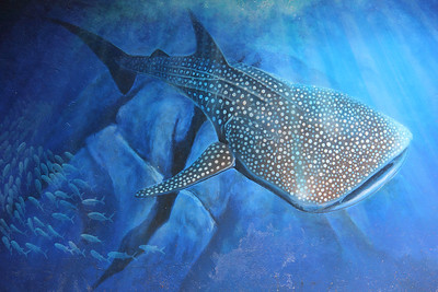 Whale shark mural.  Didn't see any whale sharks, but did see a tiger shark!