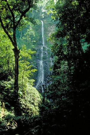 There are several cascading waterfalls in the rugged interior of Cocos Island.
