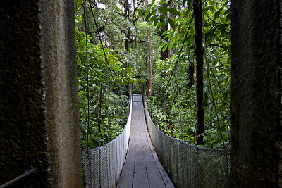 Rain forest trail suspended bridge Braulio Carrillo National Park, Costa Rica