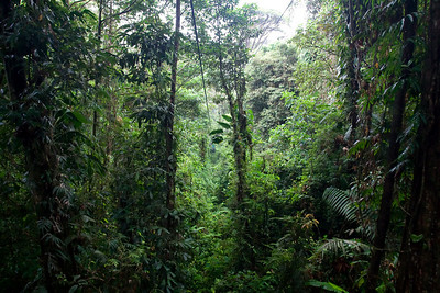 Braulio Carrillo National Park, Costa Rica