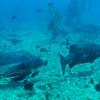 Pair o' Black Sea  Bass