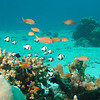 Coral Reef Fishes : Images of coral reefs and their colorful inhabitants from around the globe.