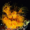 Coral Polyps Blossom at Night