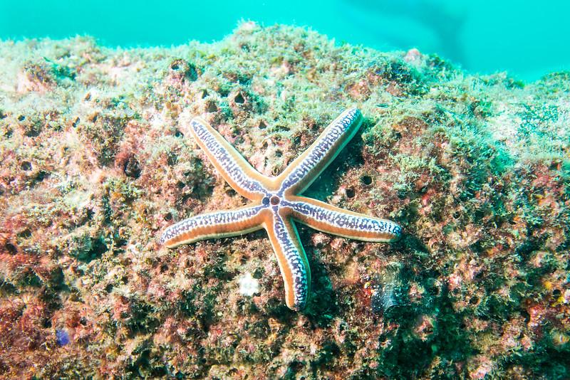 Starfish, Costa Rica - December 2014