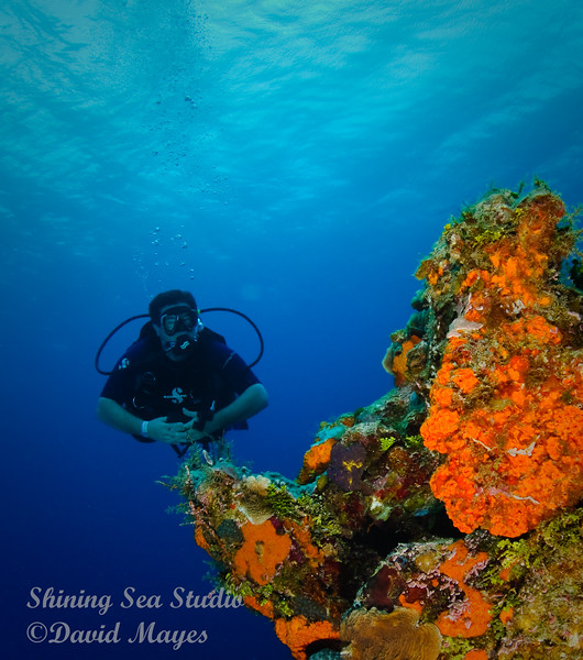 One my dive partners enjoying the view