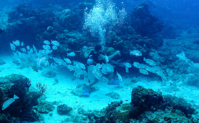 Diver surrounded by fish, Cozumel - November 2011