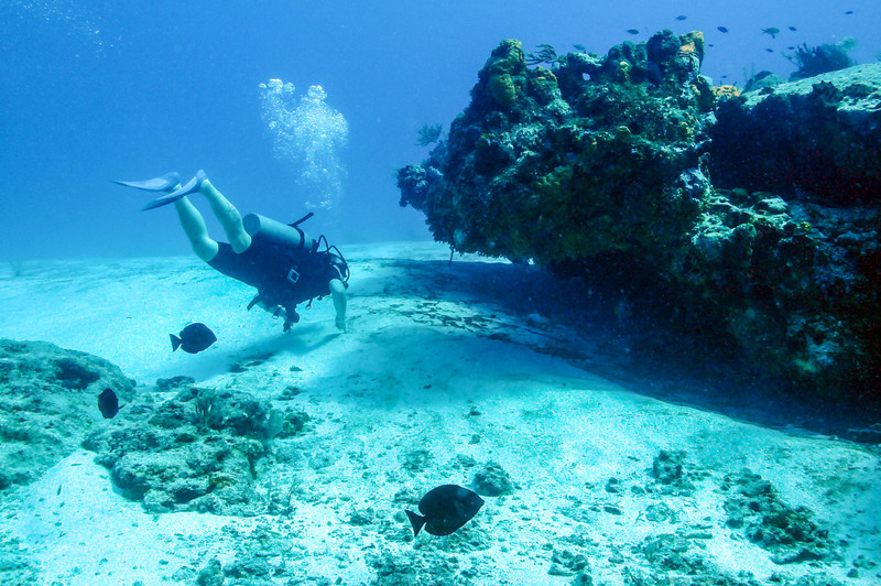 Exploring the reefs, Cozumel - November 2011