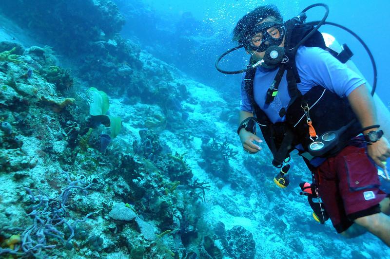 Green Moray Eel out of hiding, Cozumel - November 2011