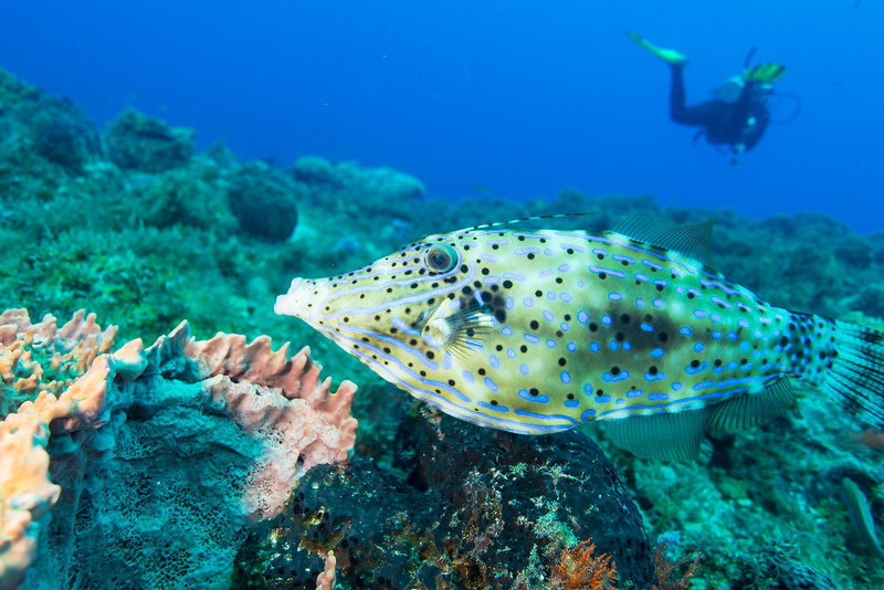 Cedral Pass dive site - Cozumel, Mexico - March 2016
