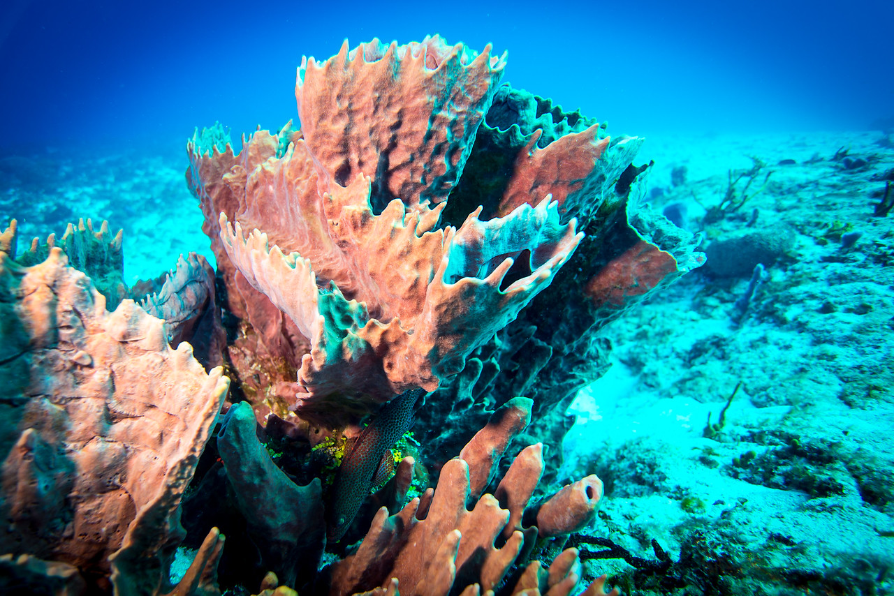Sponges - Cozumel, Mexico - March 2016