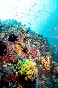 Anilao Reef scene