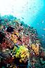 Anilao<br /> Reef scene