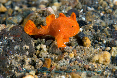Anilao underwater