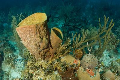 Netted Barrel & other Sponges