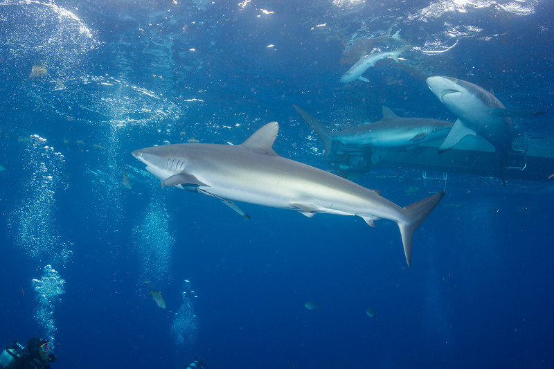 Lori & Silky Sharks