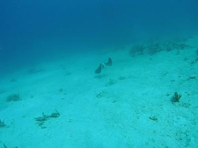 Culebra Scuba Punta Tamarindo  I with Culebra Divers