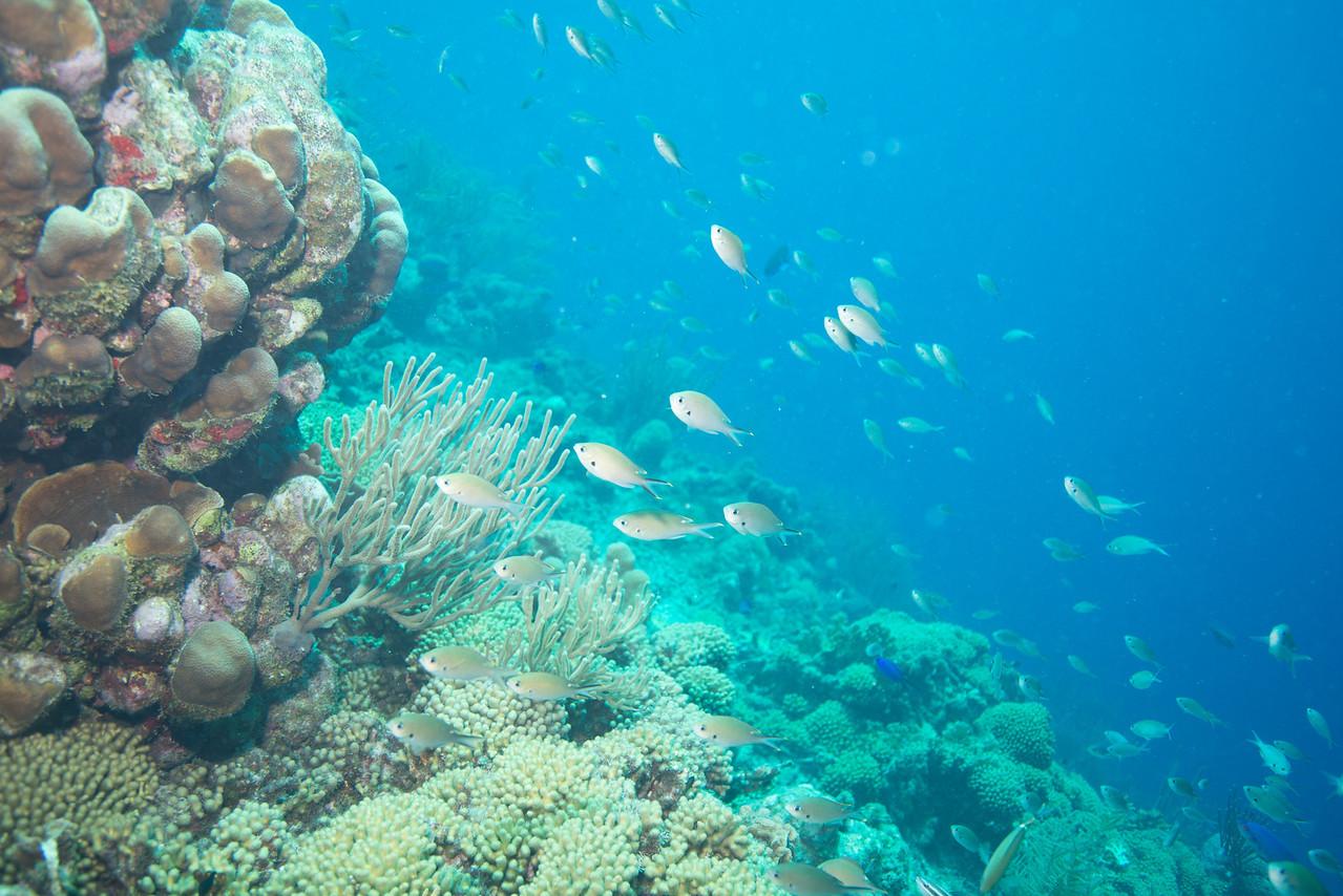 Newport dive - Curaçao 2013
