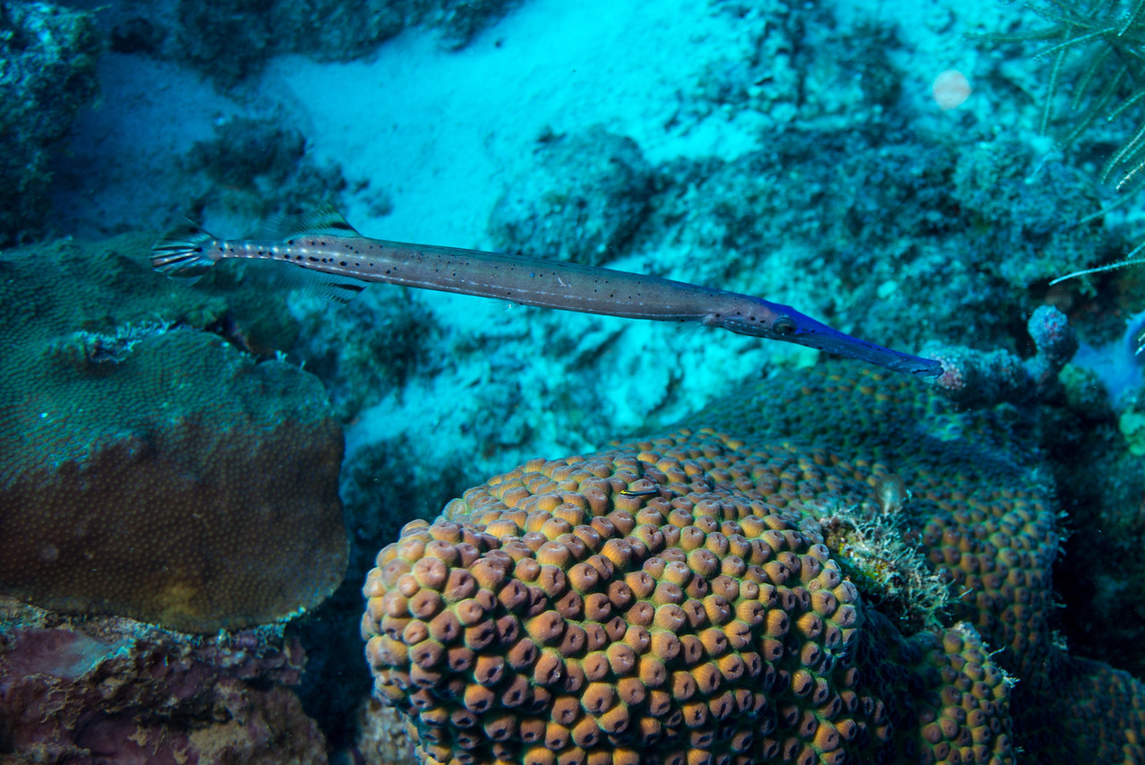 Short Wall dive - Curaçao 2013