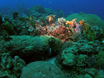 Curacao Scuba Dive Bus House Reef Pierbaai