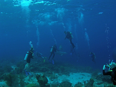 Curacao Scuba Dolphin Dive with Ocean Encounters