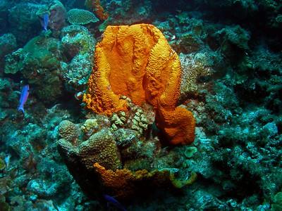 Curacao Scuba Habitat House Reef